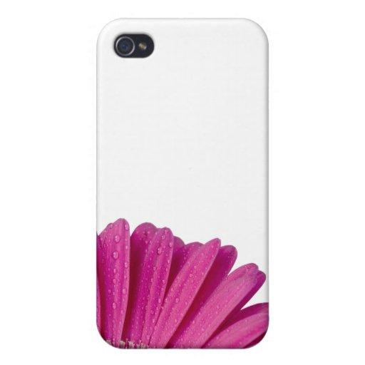 Flor rosada de la margarita con las gotitas de agu iPhone 4 fundas