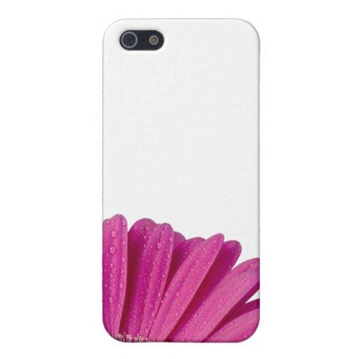 Flor rosada de la margarita con las gotitas de agu iPhone 5 carcasa