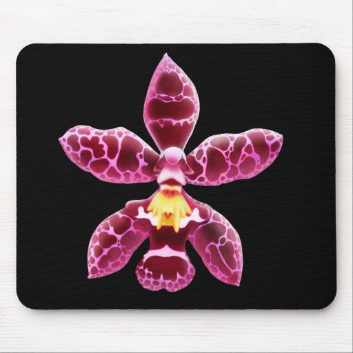 Flor rosada de la orquídea de Wilsonara Tapetes De Raton