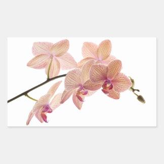 Flor rosada de la orquídea del Dendrobium - Pegatina Rectangular