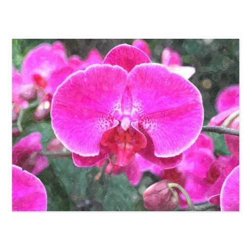 Flor rosada de la orquídea, fotografía floral postal