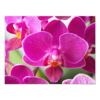 Flor rosada de la orquídea - plantilla floral de cojinete