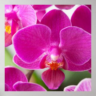 Flor rosada de la orquídea - plantilla floral de póster