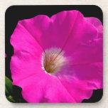 flor rosada de la petunia posavaso