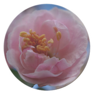 Flor rosada de la primavera platos para fiestas