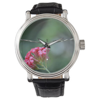 flor rosada de las alas finas de la mariposa de la relojes