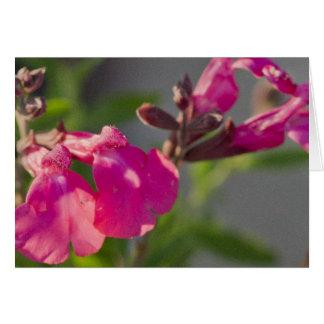 Flor rosada de Penstemone de la roca - esconda Tarjeta De Felicitación