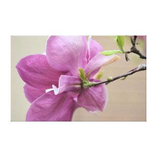 Flor rosada del árbol de tulipán lona envuelta para galerias