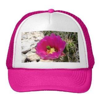 Flor rosada del cactus de erizo gorro de camionero