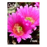 Flor rosada del cactus de los recuerdos de Del Río Postales