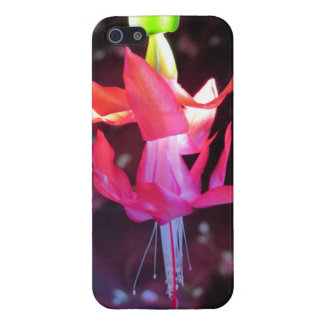 Flor rosada del cactus de navidad iPhone 5 carcasa