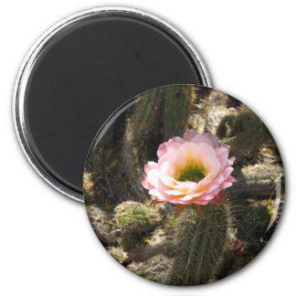 Flor rosada del cactus imán redondo 5 cm