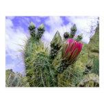 Flor rosada del cactus postales