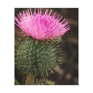 Flor rosada del cardo impresión en lienzo