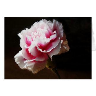 Flor rosada del clavel del clavel tarjetas