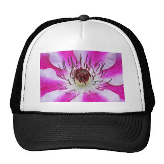 Flor rosada del Clematis Gorros