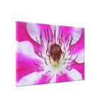 Flor rosada del Clematis Impresiones En Lona