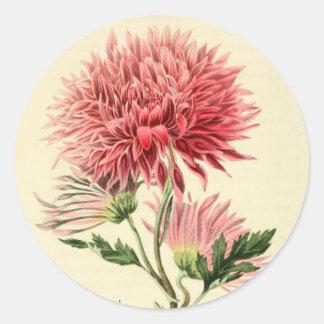 Flor rosada del crisantemo del vintage pegatina redonda