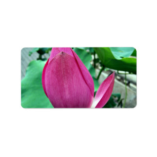 Flor rosada del deslumbramiento Lotus Etiquetas De Dirección