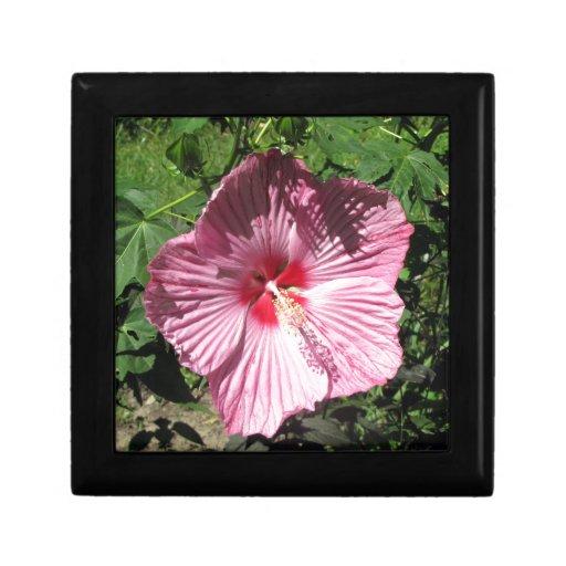 Flor rosada del hibisco caja de recuerdo