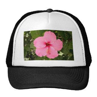 Flor rosada del hibisco en la floración gorro