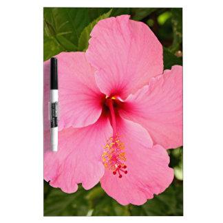 Flor rosada del hibisco en la floración pizarra