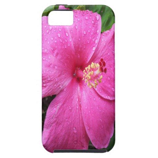 Flor rosada del hibisco iPhone 5 cobertura