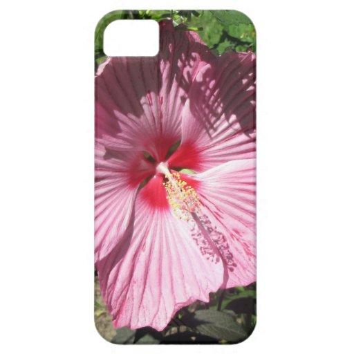 Flor rosada del hibisco iPhone 5 coberturas