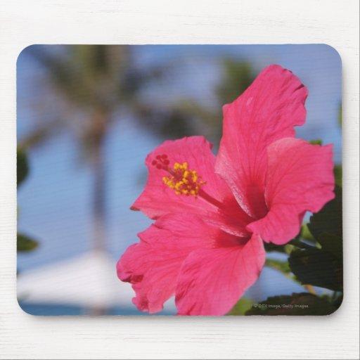 Flor rosada del hibisco mousepads