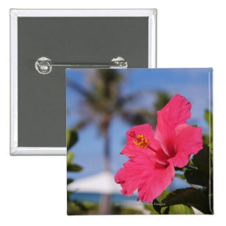 Flor rosada del hibisco pin cuadrado