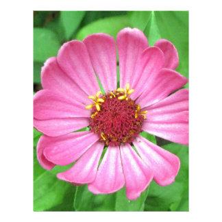 Flor rosada del jardín del Zinnia