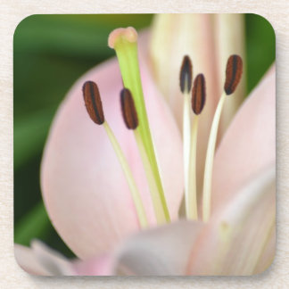 Flor rosada del lirio de la primavera posavasos de bebida