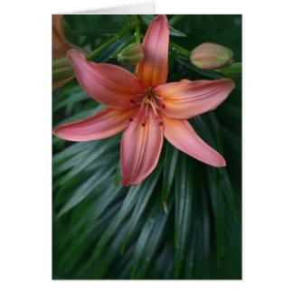 Flor rosada del lirio tigrado tarjeta de felicitación
