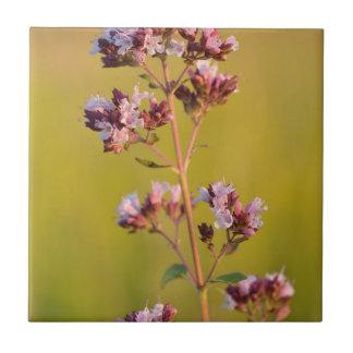 Flor rosada del orégano tejas