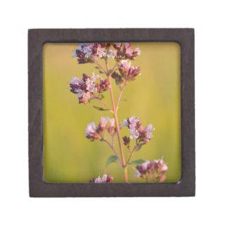 Flor rosada del orégano cajas de regalo de calidad