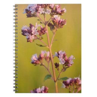 Flor rosada del orégano libros de apuntes