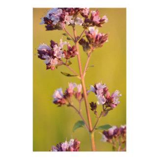 Flor rosada del orégano  papeleria
