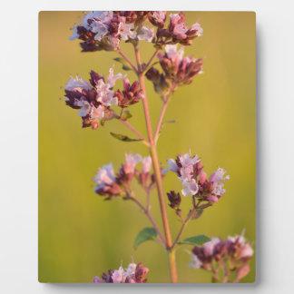 Flor rosada del orégano placas con fotos