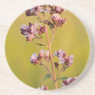 Flor rosada del orégano posavasos personalizados