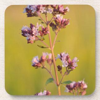 Flor rosada del orégano posavasos de bebida