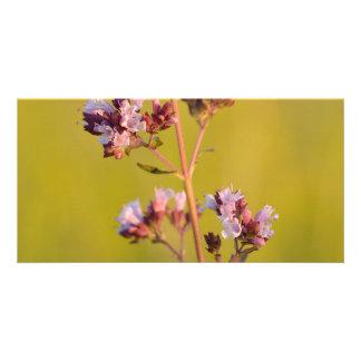 Flor rosada del orégano
