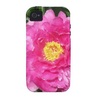 Flor rosada del Peony con el centro amarillo iPhone 4 Carcasa