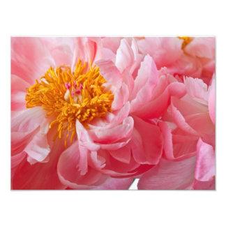 Flor rosada del Peony de la primavera - plantilla  Fotografía