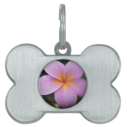 Flor rosada del Plumeria de Hawaii Placa De Mascota