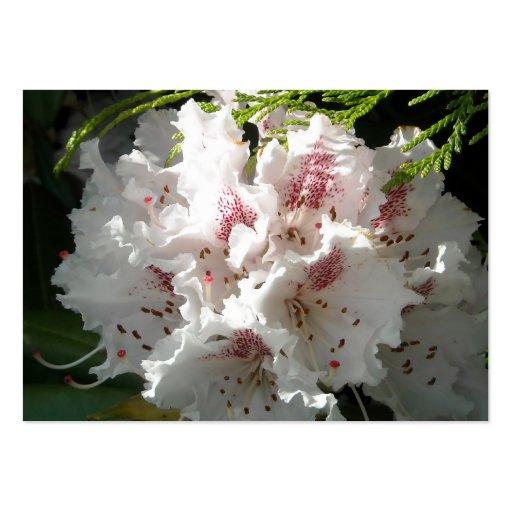 Flor rosada del rododendro en cedro tarjetas de visita grandes