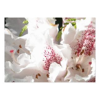 Flor rosada del rododendro en el cedro Closup 2 Plantilla De Tarjeta Personal