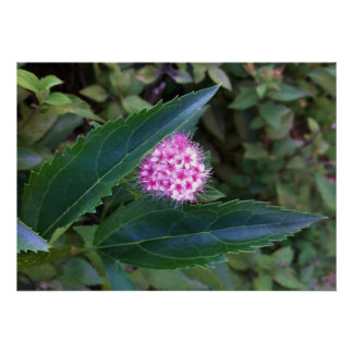 Flor rosada del verano póster