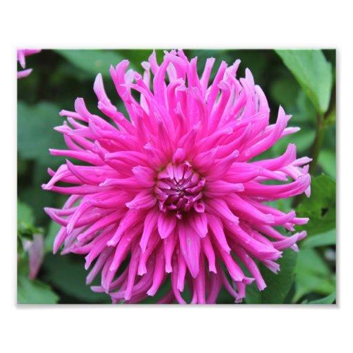 Flor rosada detallada fotografías