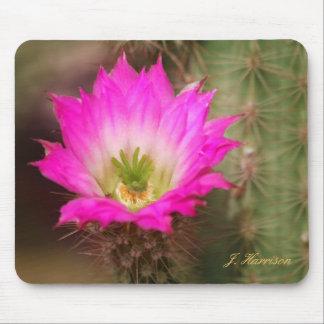 Flor rosada en el cojín de ratón de cactus alfombrilla de ratón