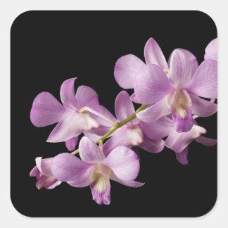 Flor rosada en negro - orquídeas de la orquídea pegatina cuadrada